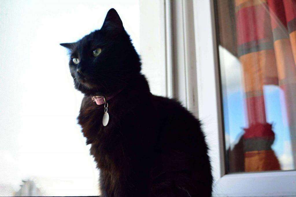 ziua internațională a pisicilor